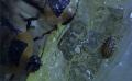 Blaberus discoidalis adult a semiadult se napájí na gelu