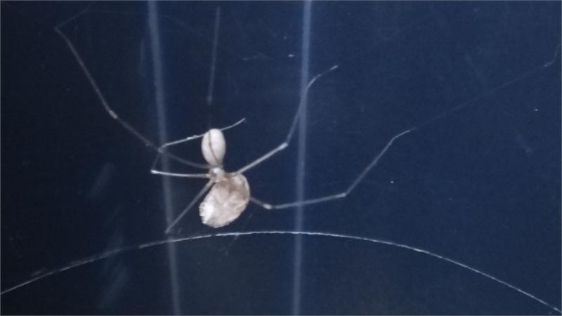 Atak pavouka