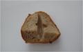 Pokus s chlebem levá polovina mokrá pravá suchá